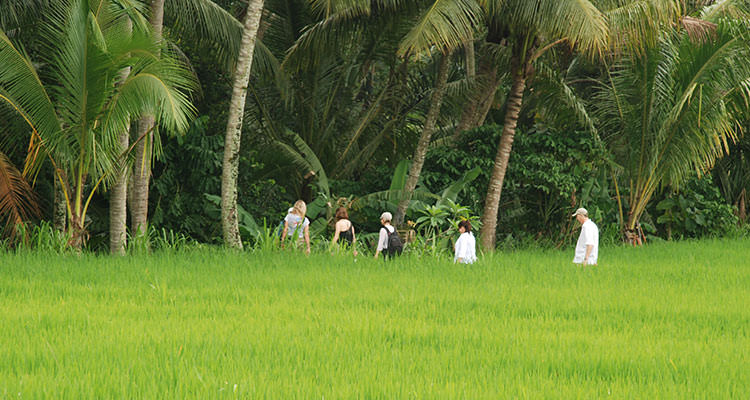 A walk in the emerald rice fields of Bali is an unforgettable experience during your yoga retreat in Ubud, Bali.